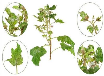 пневматический распылитель для сада